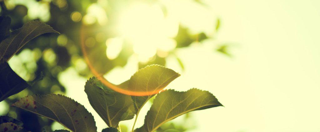 Too Good To Go, la iniciativa para gestionar el aprovechamiento de la comida, se pasa a la energía verde con ecovatios