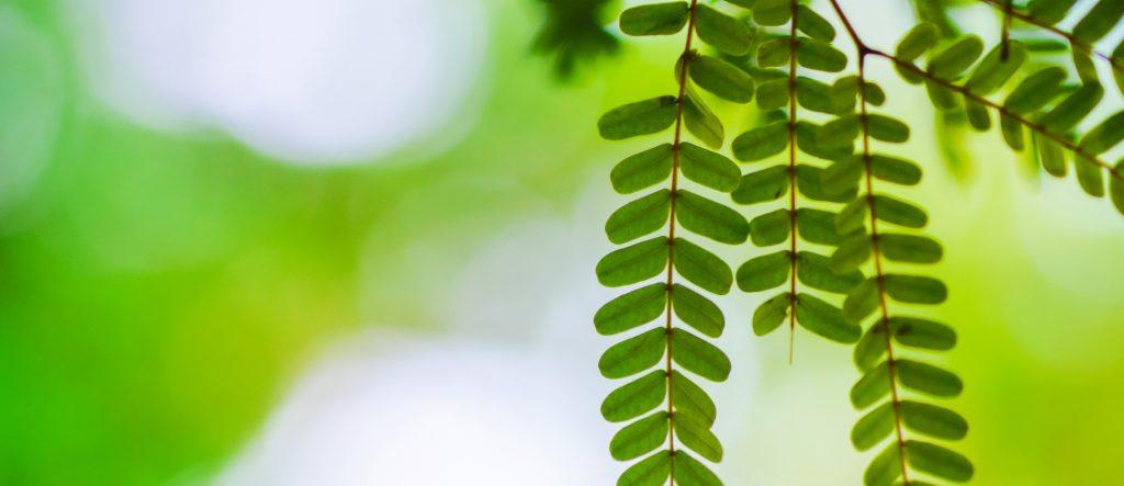 ecovatios, electricidad verde certificada un año más por la CNMC